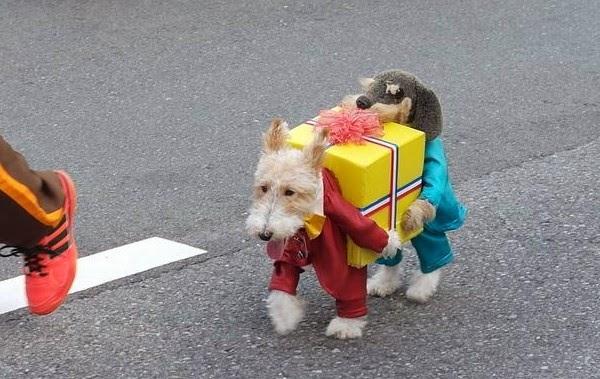 Puppy Costume Pattern