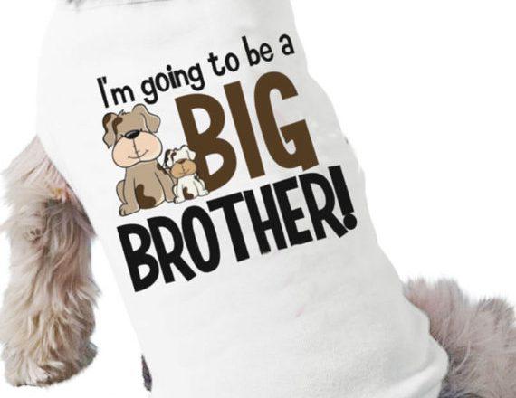 Big Dog Shirts