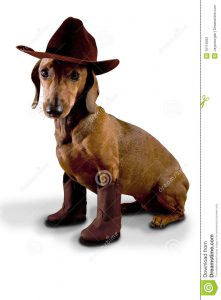 Dog Cowboy Boots