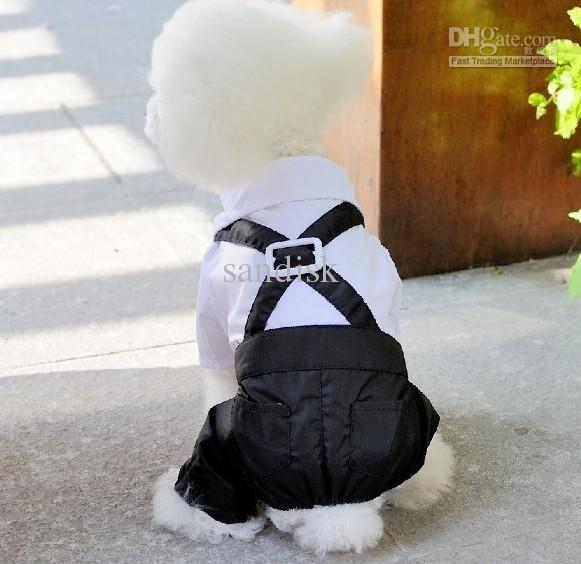Cute Boy Dog Clothes Photo 1 Dress The Dog Clothes
