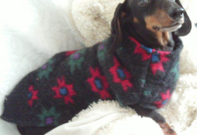 Sweaters Coats