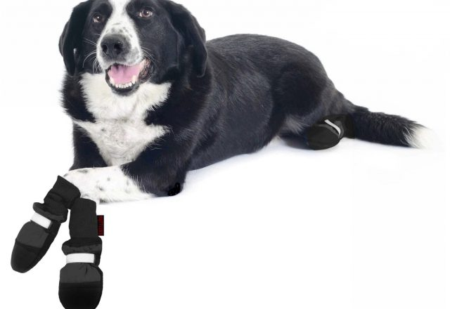 Dog Petco