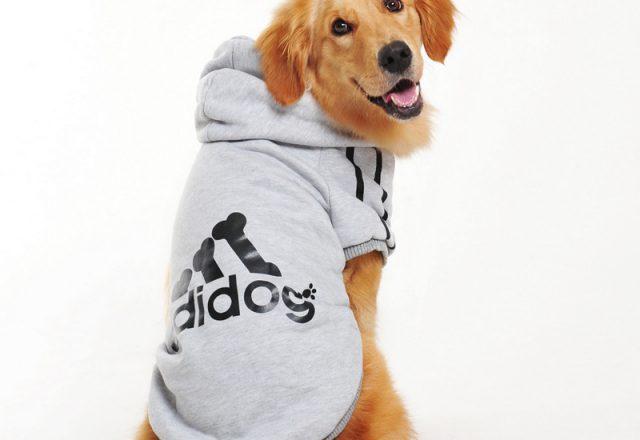 Labrador Dog Clothes