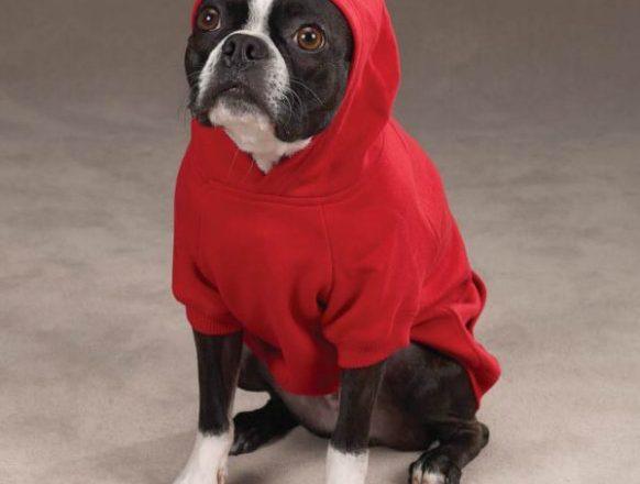 Dog Sweat Shirts