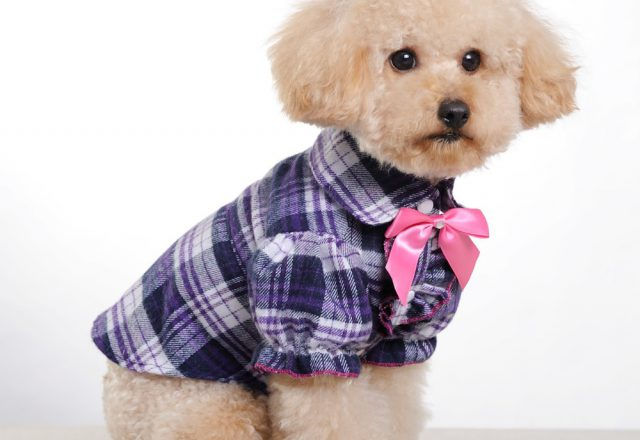 Pet Shirts For Dogs