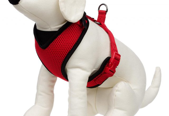 Petco Dog Clothes
