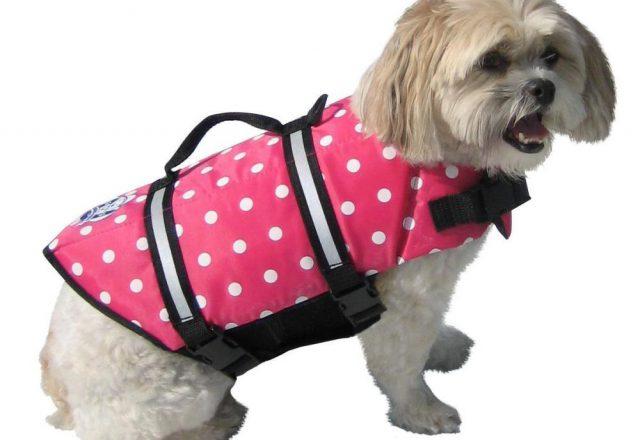 Pink Ladies Dog Jacket