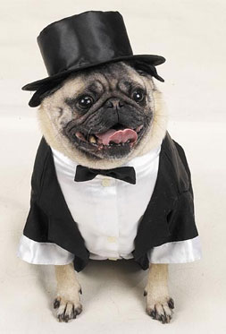 Pugs In Suits