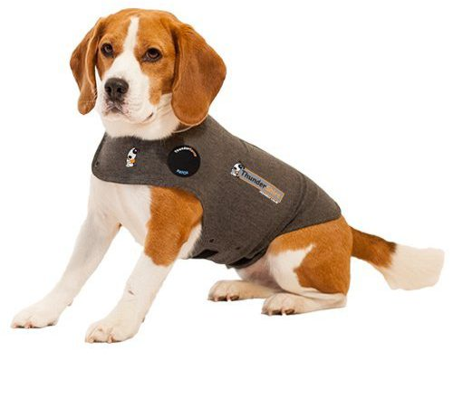 T-Shirts For Dogs To Wear