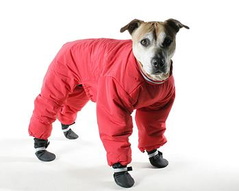 Dog Winter Gear