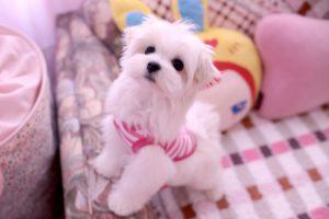 Dog Fashions