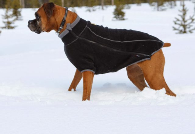 Sportswear For Dogs