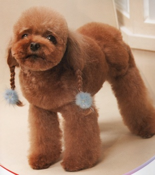 Japanese Poodle Haircuts