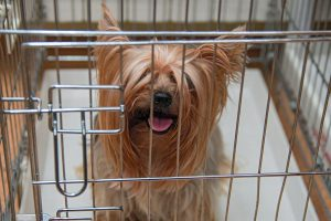 Yorkie Cage