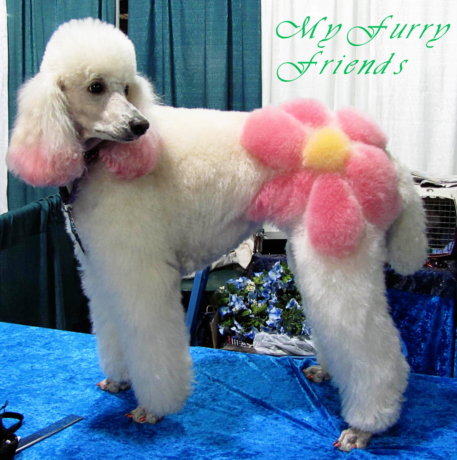 Bad Poodle Haircuts photo - 1