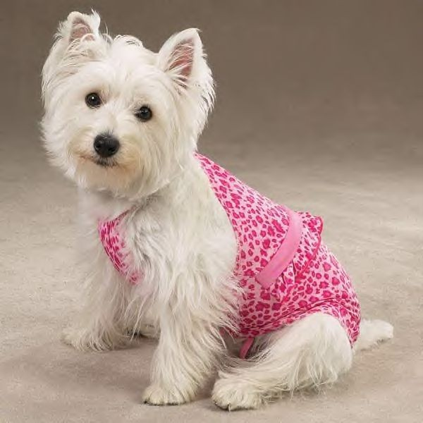 Bathing Suits For Dogs photo - 3