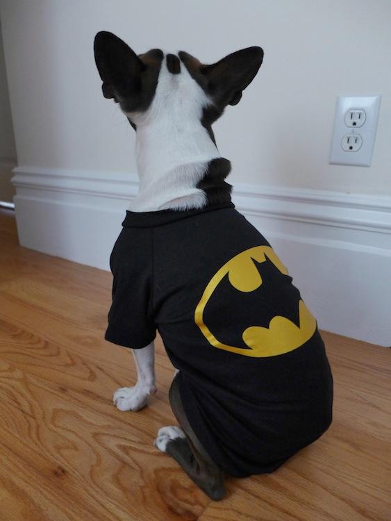 Batman Dog Shirt photo - 1