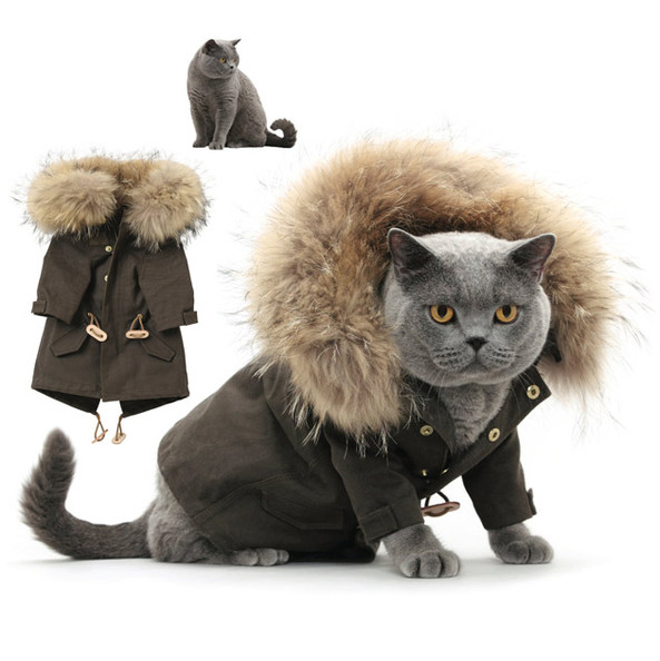 Best Cat Outfits photo - 1