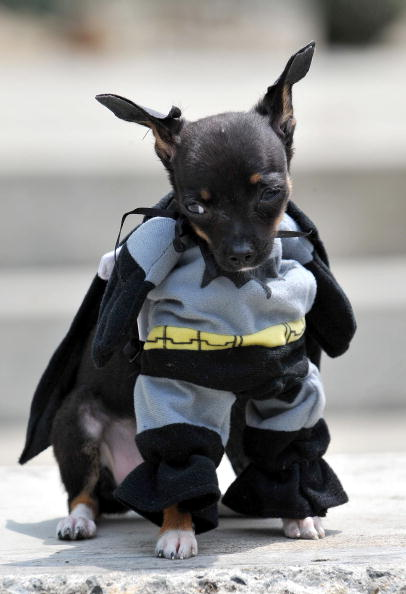 Best Costumes For Dogs photo - 1