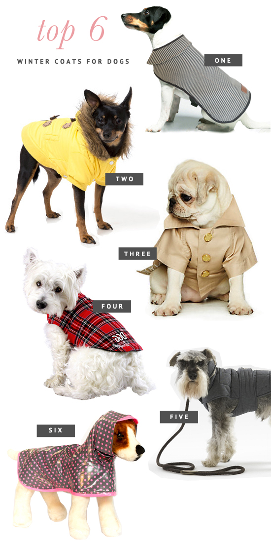 Best Winter Coats For Dogs photo - 2