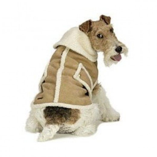 Best Winter Coats For Small Dogs photo - 2