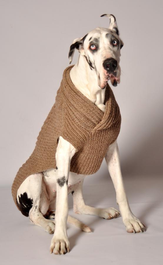 Big Dog Sweater photo - 1