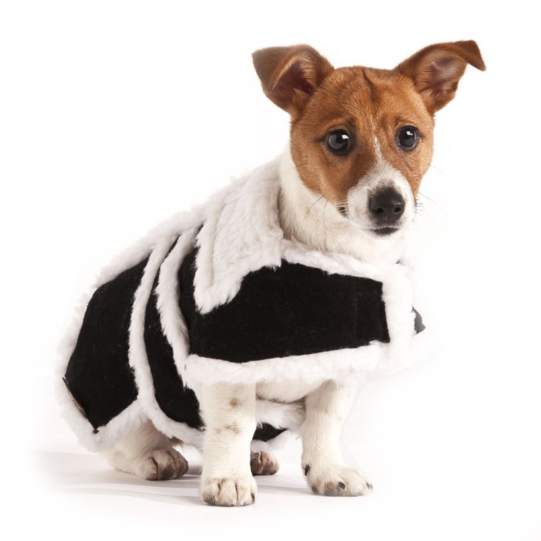 Black Dog Coat photo - 1