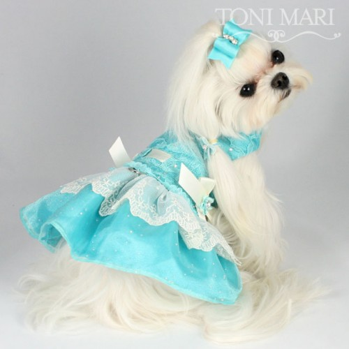 Blue Dog Dress photo - 1