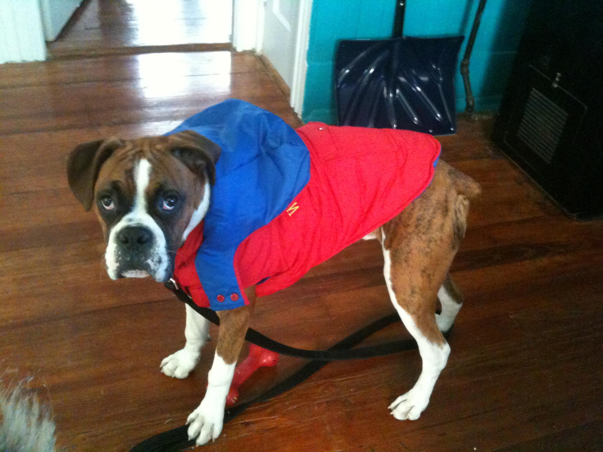 Boxer Dog Coat photo - 1