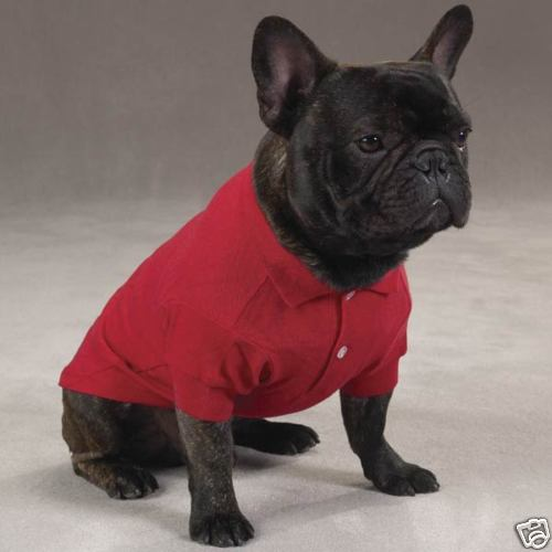Bulldog Clothes For Dogs photo - 1