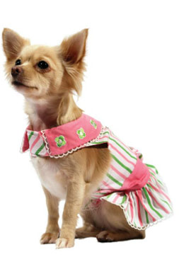 Chihuahua Designer Clothes photo - 1