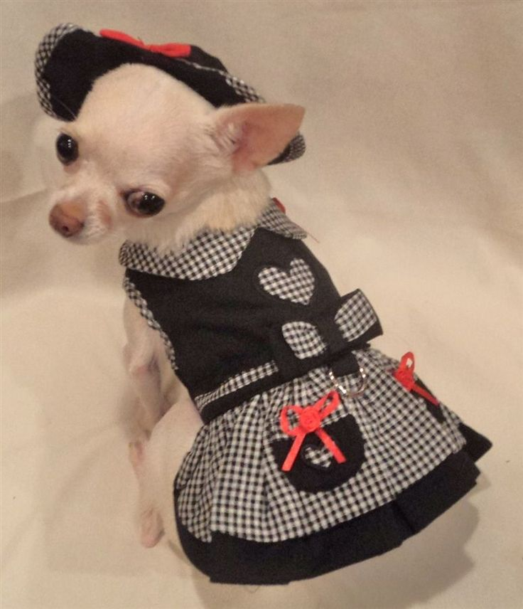 Chihuahua Dress photo - 1