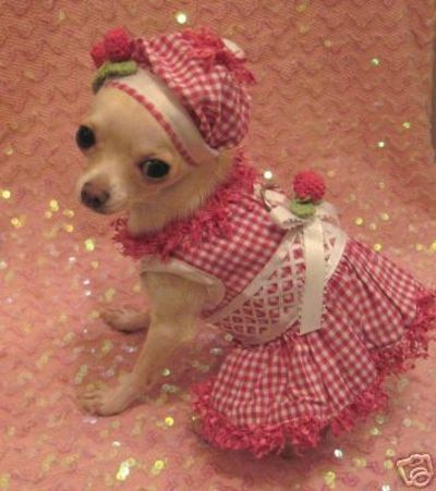 Chihuahua Puppy Clothes photo - 1