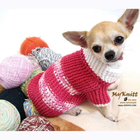 Chihuahua Sweaters photo - 1
