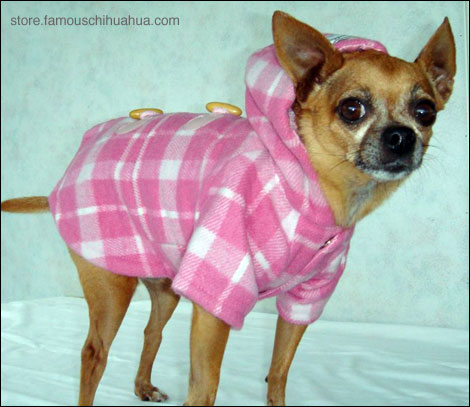 Chihuahua Winter Clothes photo - 1