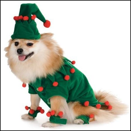 Christmas Outfit Dog photo - 1