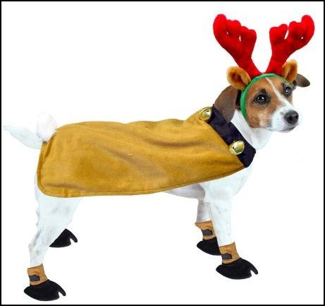 Christmas Outfits For Small Dogs photo - 3 - Christmas Outfits For Small Dogs Dress The Dog - Clothes For Your