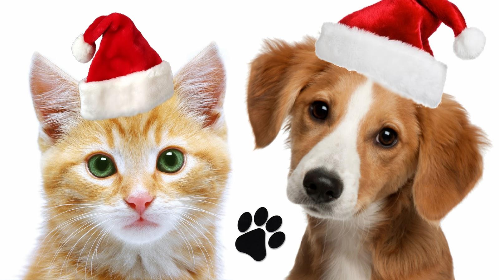 Christmas Pets photo - 1