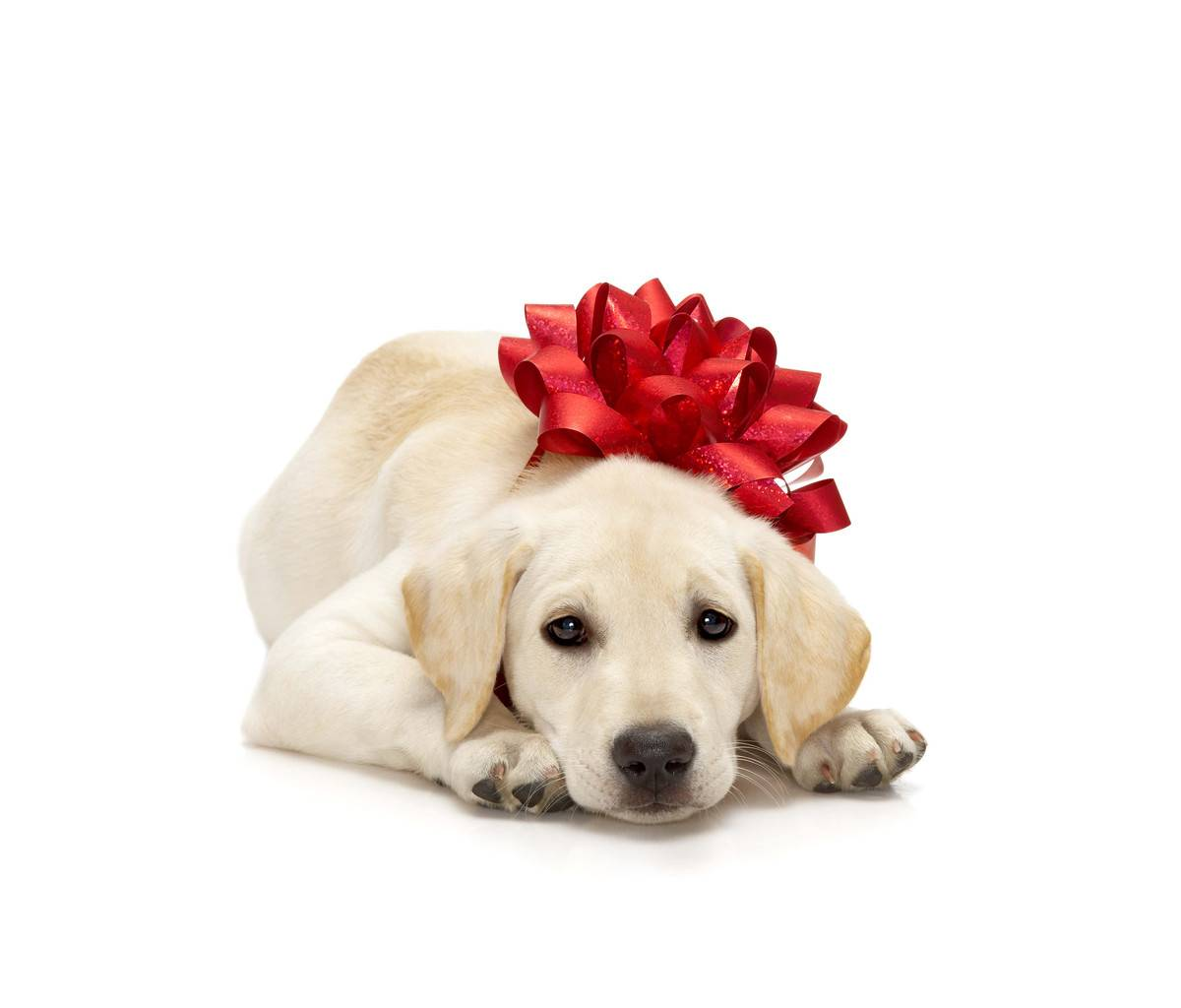 Christmas Stuff For Dogs photo - 1