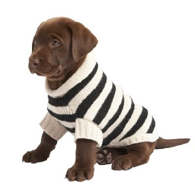 Clothes For Labradors photo - 1