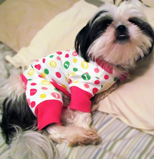 Clothes For Shih Tzu photo - 1