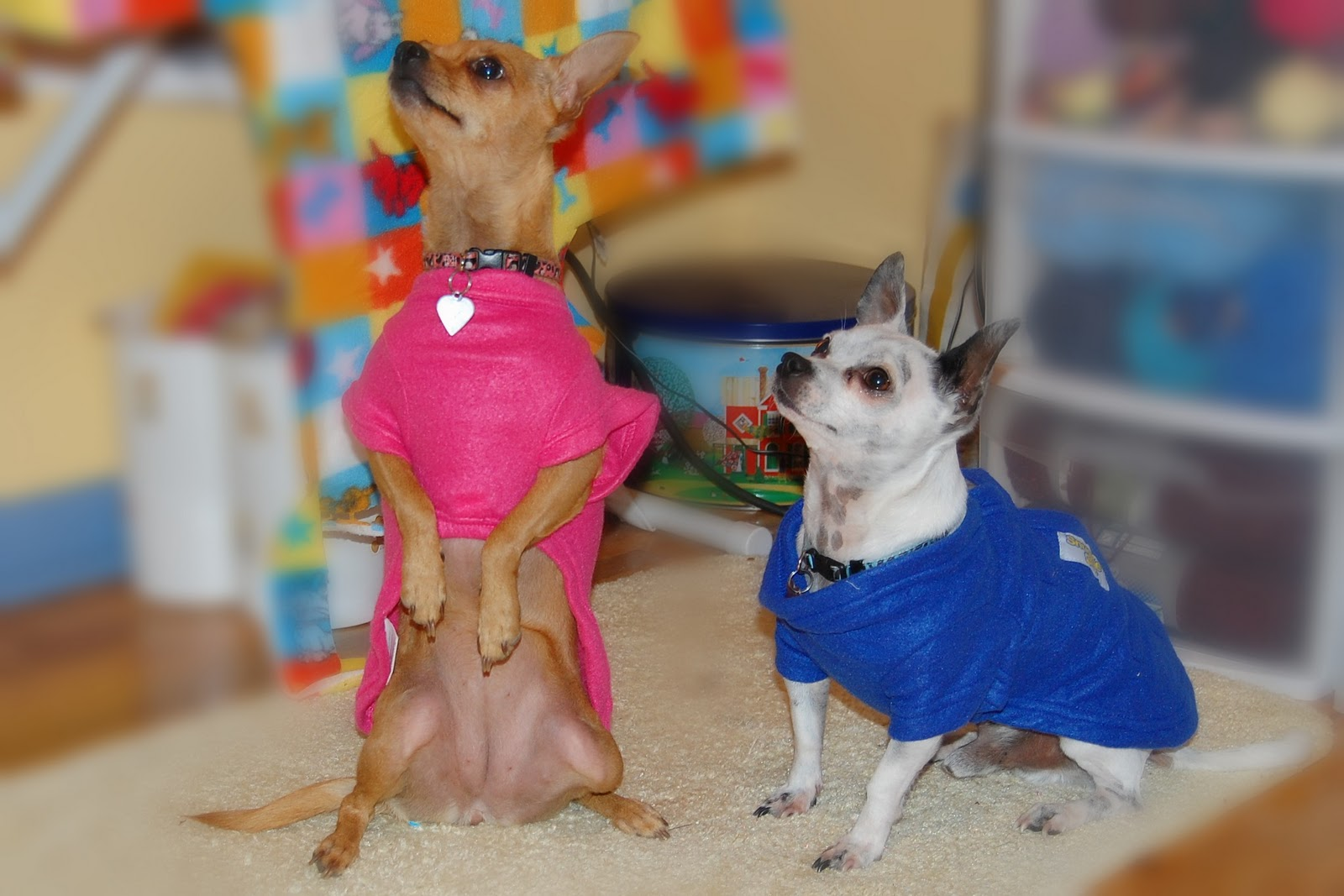Clothes For Tiny Dogs photo - 1