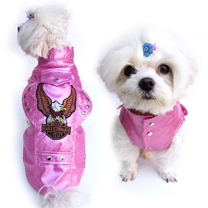 Clothes For Tiny Dogs photo - 3