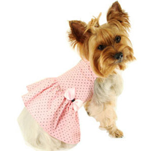 Clothes For Yorkie Puppies photo - 2