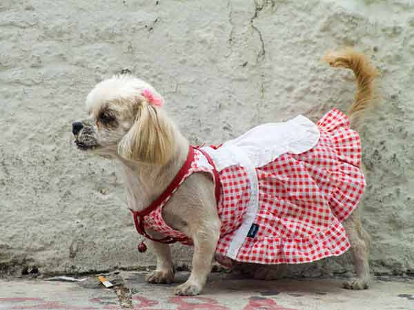 Clothing For Puppies photo - 3