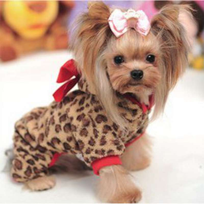 Clothing For Small Dogs photo - 3