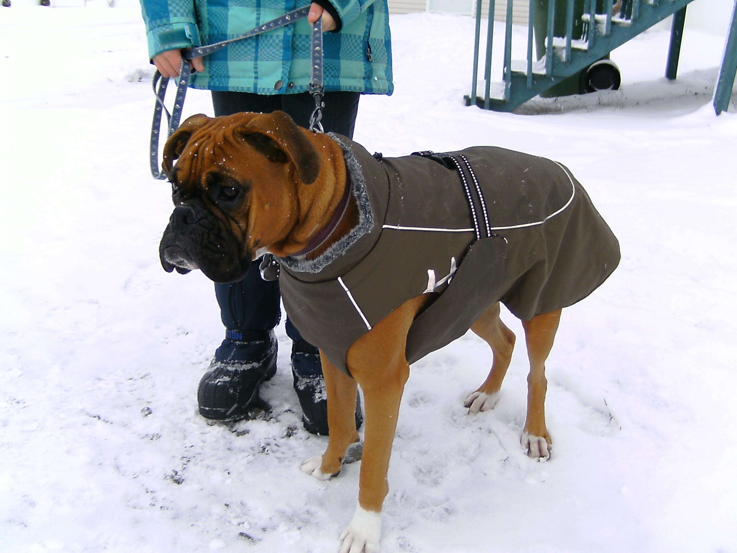 Coat For Boxer Dog photo - 1