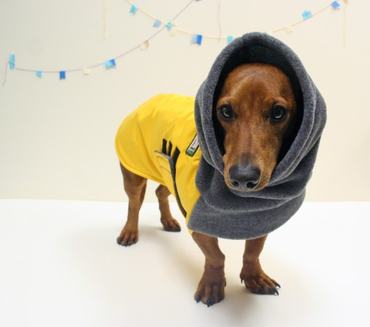 Coats For Dachshunds photo - 1