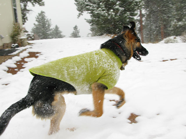 Cold Weather Gear For Dogs photo - 1
