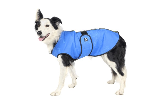 Cool Coat For Dogs photo - 1